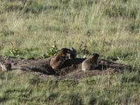 Marmotte 5