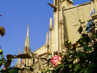 Notredame - Una veduta della cattedrale parigina