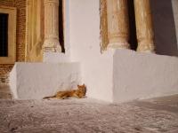 Gatto - Relax (Tunisia)