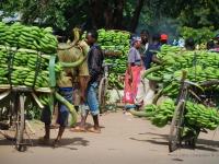 Banane - Le banane fanno migliaia di chilometri per finire poi sulle nostre tavole ma sicuramente i più faticosi sono quei pochi fatti in bici fino ai mercati locali