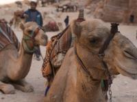 """I beduini offrono ai turisti un """"comodo"""" trasporto lungo i sentieri del sito"""