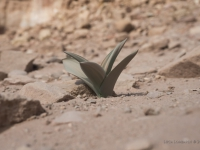 Una delle poche piante che riescono a crescere nel terreno arido