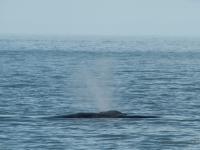 """Il """"respiro"""" della balena"""