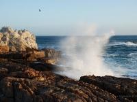 Hermanus - Un'onda oceanica si infrange contro la scogliera di questa piccola località dove migrano le Southern Whales (South Africa)